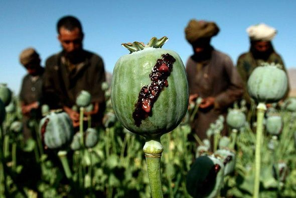 Drug Traffic From Afghanistan Threatens Russia's National Security: Moscow Says