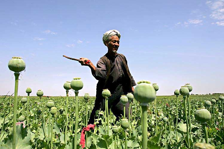 UNODC World Drug Report: Opium Cultivation Falls in Afghanistan, But Illicit Drug Cultivation & Trade May Complicate Peace Prospects