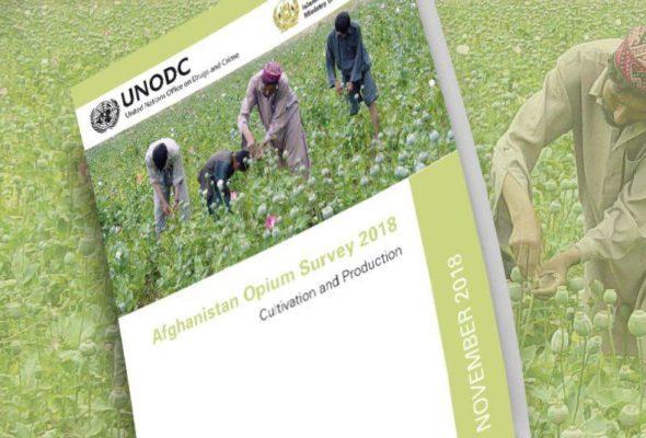 UN Opium Survey Reveals Sharp Decline in Poppy Cultivation Due to Drought
