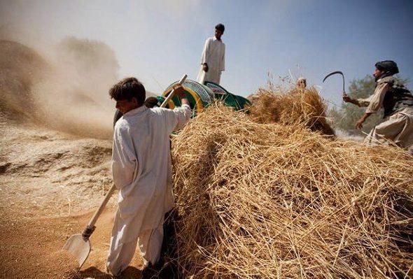 UN Seeks $733 Million Humanitarian Aid for Afghans in 2020