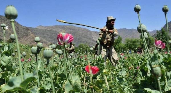 ONDCP Data Reveals Drop in Afghanistan Poppy Cultivation