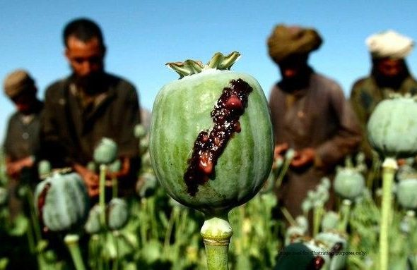 UN World Drug Report: Meth Market Grows While Opiate Production Same In Afghanistan