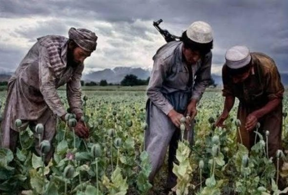 Taliban Continues to Profit from Narcotics Trafficking: UN Report